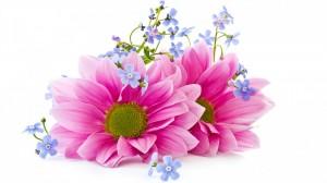 cvety-lepestki-flowers